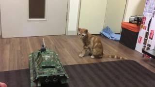 猫と戦車 thumbnail