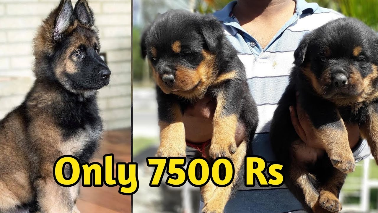 Dog Price List In India 2019 Part 3 Dog Price List Youtube