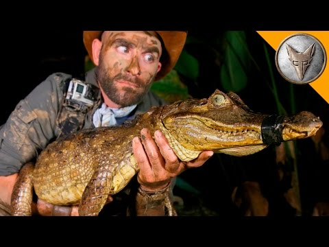 Thumbnail: DANGEROUS Caiman Catch!