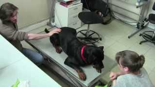 animal training en consultation vétérinaire