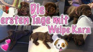 Die ersten 3 Tage mit Welpe Kara 🐶💕 | Ich rede Klartext mit euch!!  😤