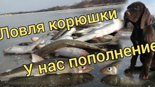 Ловля корюшки Опять жор Ловля корюшки на комбайны Сахалинская рыбалка Sakhalin fishing