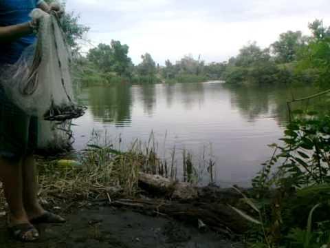 сетка для ловли рыбы купить киев