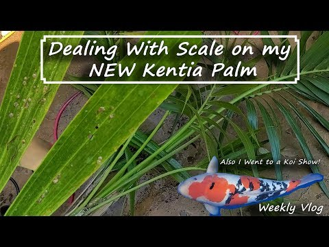 I Bought A Kentia Palm & It Has Scale! Oops