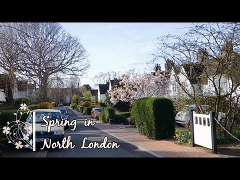 Spring in North London | Flowers & Flowering trees
