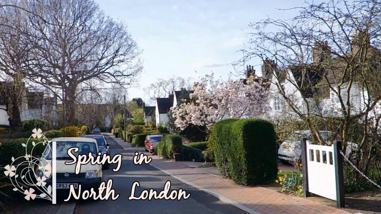 Spring In North London Flowers Flowering Trees Youtube