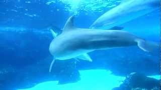 Dolphin Sex !!!