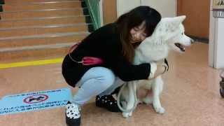 秋田犬の雪です(*^_^*) 又よろしければこちらの http://www.puppygarden...