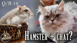 Q/A 14 : Cohabitation du HAMSTER avec le CHAT?