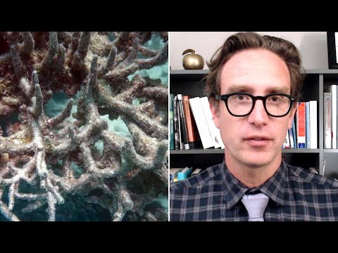 Dan Riskin on how coral may be adapting to climate change