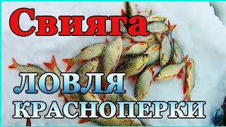 Свияга Краснопёрка радует Рыбалка в марте
