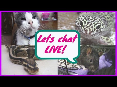 Should you start a pet collection? -Pet Adventures Live Stream