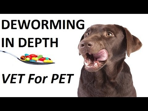 Deworming in Dogs. In Depth ||VET for PET|| Hindi