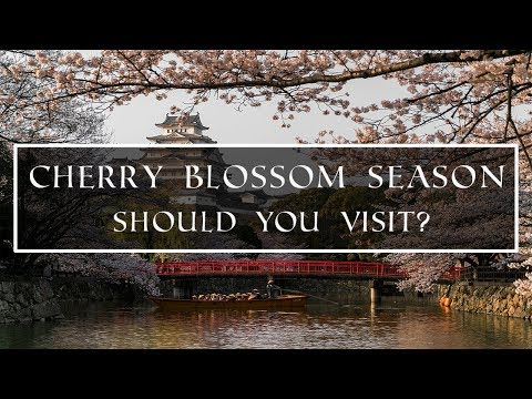 THE REALITY OF CHERRY BLOSSOM SEASON IN JAPAN | IS IT WORTH IT?