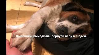 Спасение выкинутой на помойку   больной собаки.