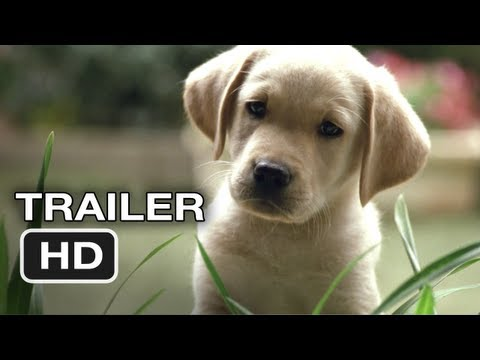 Quill The Life of a Guide Dog Official Full online #1 (2012) HD Movie