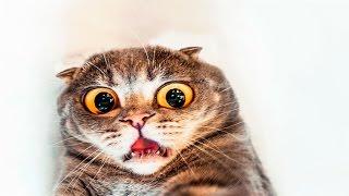 Приколы с кошками - Испуганные кошки Подборка #2