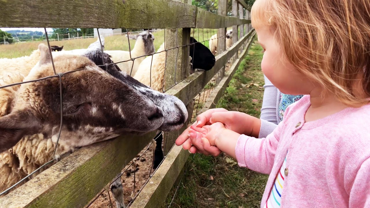 World of Country Life | Exmouth | Devon