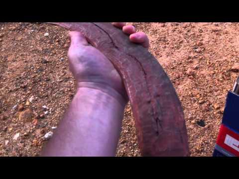 Treasure hunting for Aboriginal artifacts in Australia