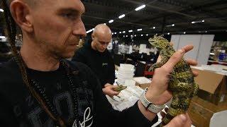 BNT 165 Caiman crocodilus oswojony? (Terraria en exoknaag Houten)