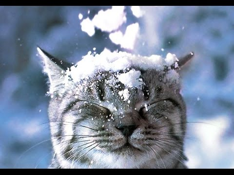 Top Funny Animals in Snow Videos Compilation
