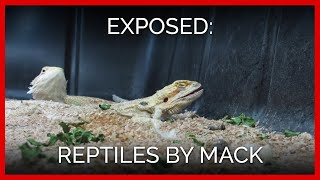 A Longer Look Inside Reptiles by Mack