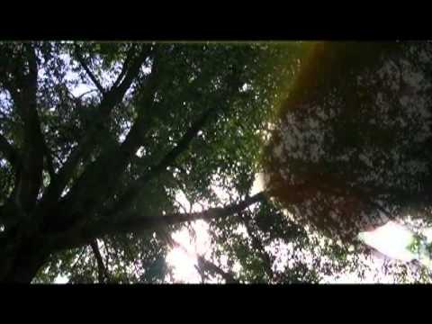 Copeland - Every Silence