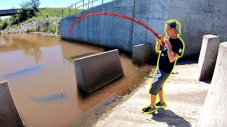 Surprise BIG FISH Catch from Stagnant Spillway!!