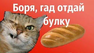 Боря,отдай булку! Супер песня про кота Борю.