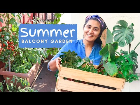 Summer Garden| What I am growing and How I am growing in my Balcony