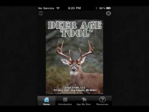How to Age Whitetail Deer