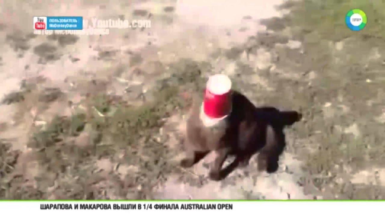 Собака спасла кота видео