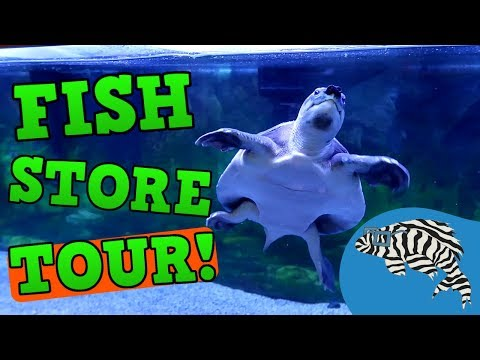Monster Fish Store Tour! Aquatics and Exotics