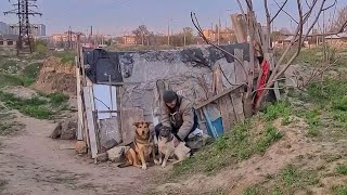 What does a Homeless Man do with 30 Stray Dogs ?