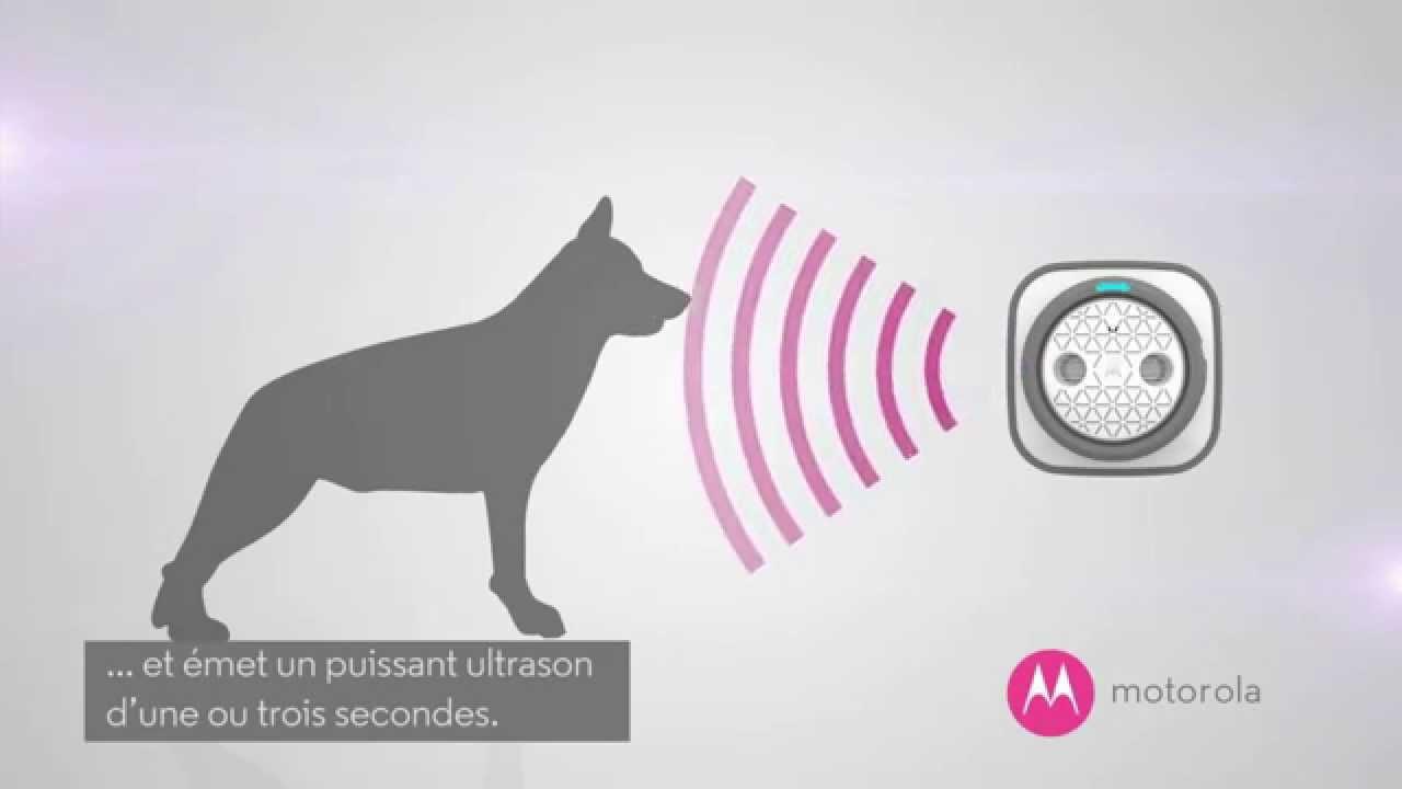 Motorola bark 500u bo tier ultrasons anti aboiement for Boitier anti aboiement exterieur