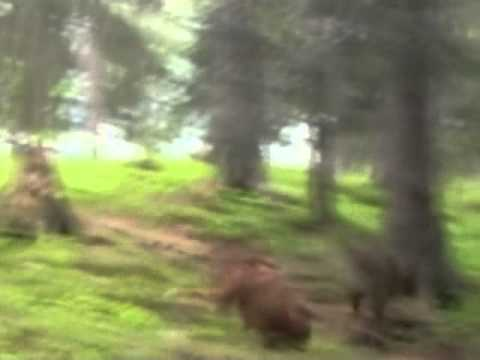 Stupid dog gets run over by a deer