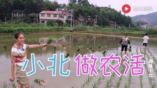 【湘妹小北】小北冒雨做農活,4個人3小時插完1畝田,效率還行吧