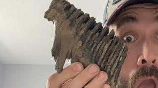 New fossil alert 🚨