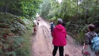 Balade / promenade canine du 22 septembre 2013 - 1/5