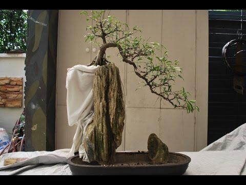 Rock Grown Bonsai Youtube