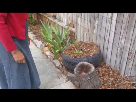 A Suburban Garden in Bakersfield, California - Presented by Oneheartfire