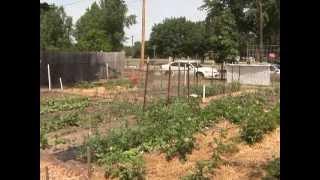 Community Gardens: Planning Your Priorities