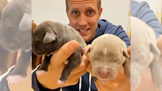 Help Name Homeless Puppies & Pittie Mama!