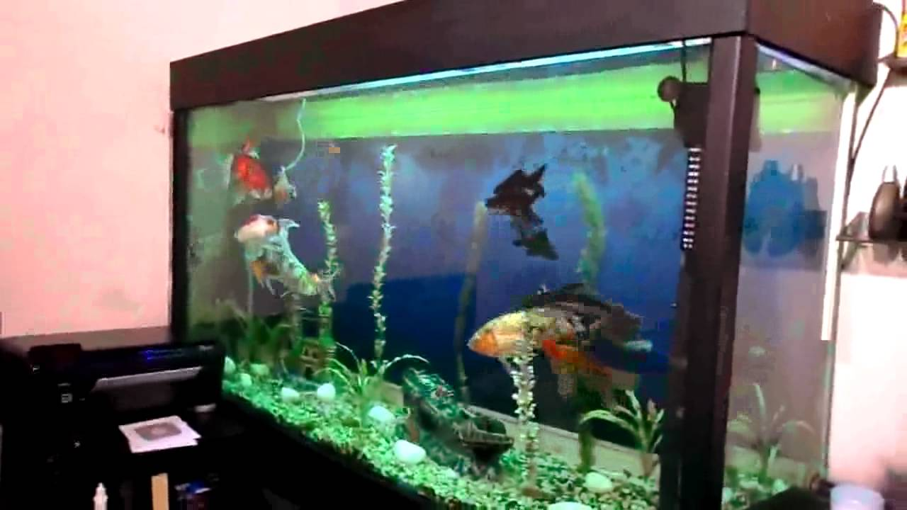 Aquario De 850lts Com Tubarao Em Piraju Sp Youtube