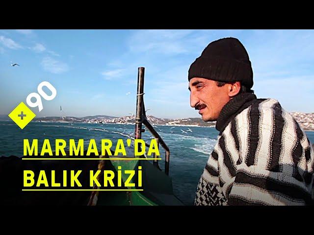 Balıklar tükeniyor: Marmara Denizi'nde balık avı krizi