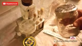 производство мицелия грибов, ЭТО ВАЖНО УМЕТЬ и ЗНАТЬ, урок 7