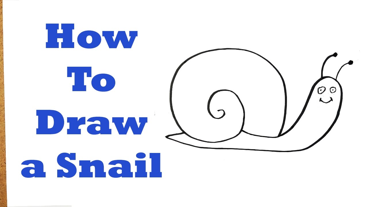 How To Draw A Snail Very Easy For