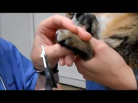 Nail Trims - Wyoming Animal Hospital