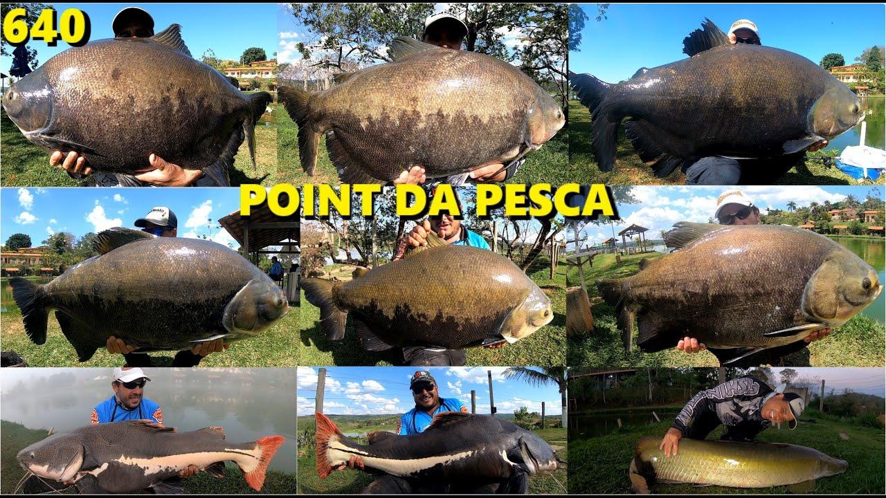 O Point da Pesca é a casa dos peixes gigantes em Goias - Programa Fishingtur 640