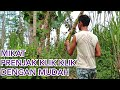 Mikat Burung Prenjak Sawah Klik Klik  Mp3 - Mp4 Download